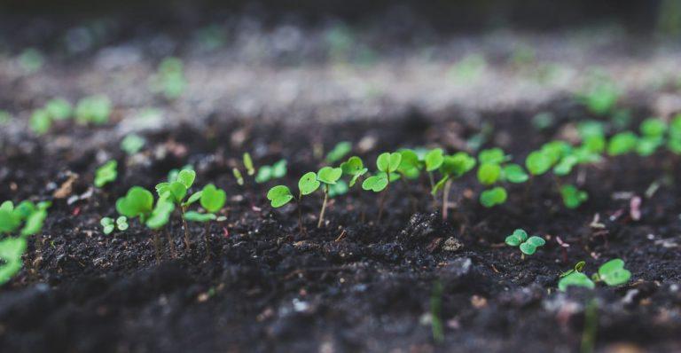Agroecología de varios mundos II