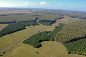 Estado de excepción para forestales en Chile y Uruguay